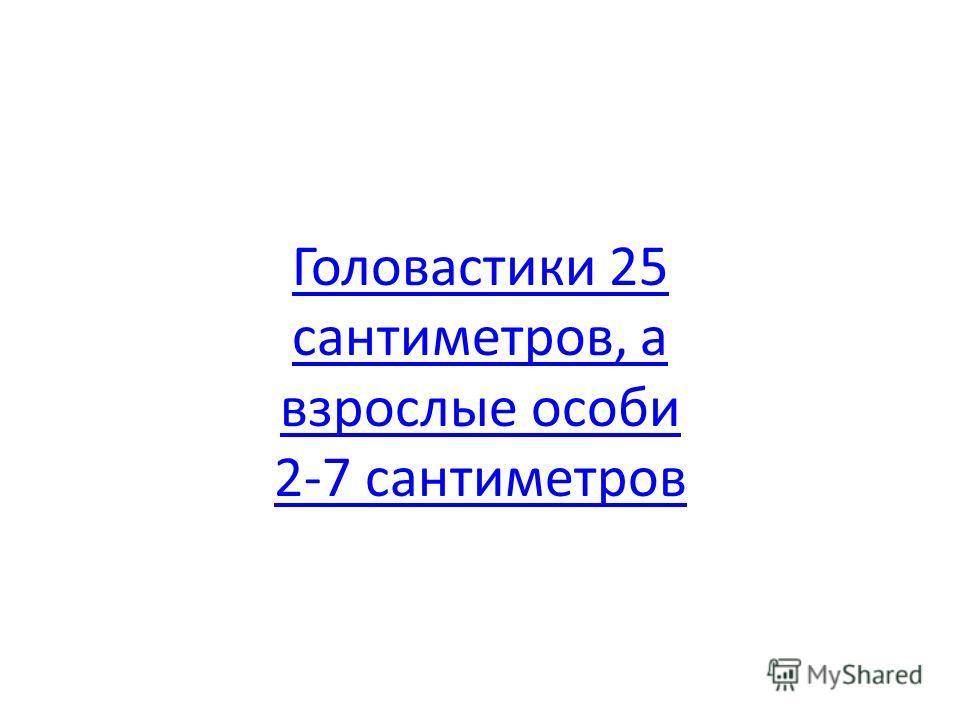 Головастики 25 сантиметров, а взрослые особи 2-7 сантиметров
