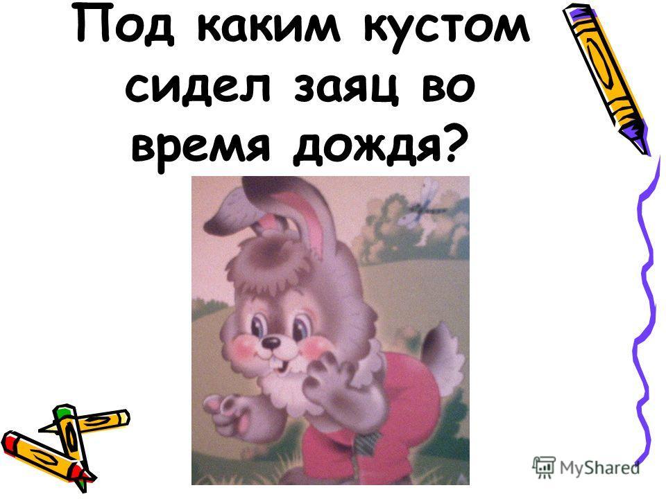 Под каким кустом сидел заяц во время дождя?