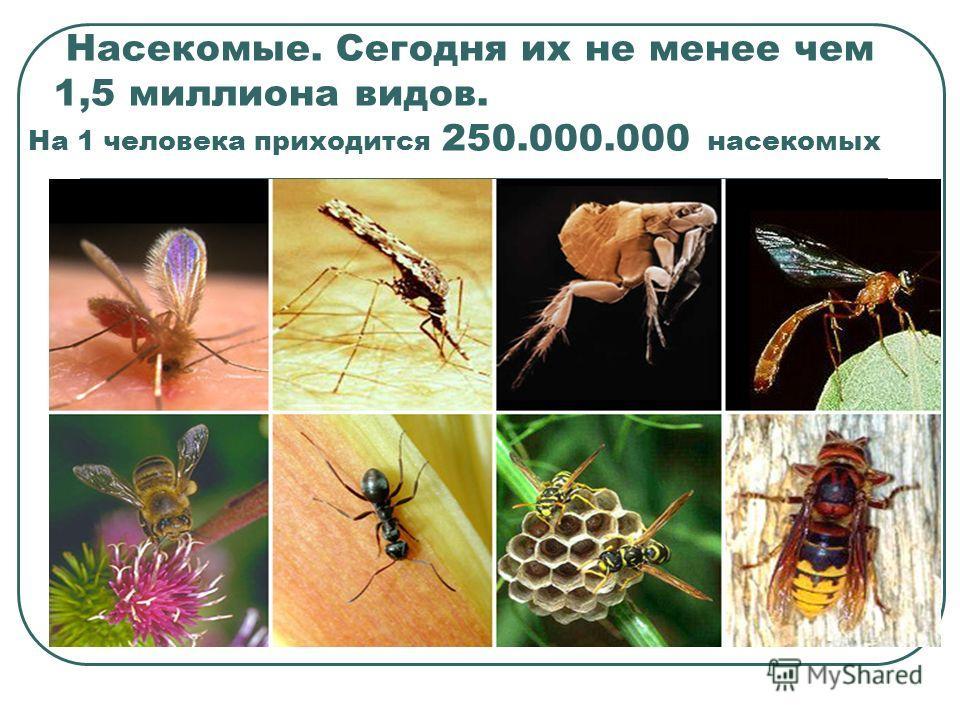 Насекомые. Сегодня их не менее чем 1,5 миллиона видов. На 1 человека приходится 250.000.000 насекомых