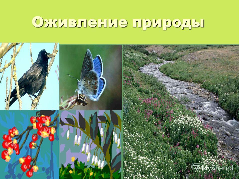 Оживление природы Оживление природы
