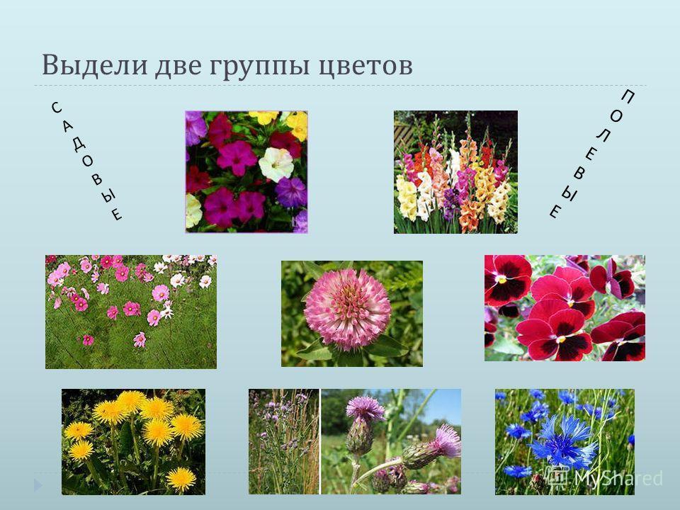 Выдели две группы цветов ПОЛЕВЫЕПОЛЕВЫЕ САДОВЫЕСАДОВЫЕ