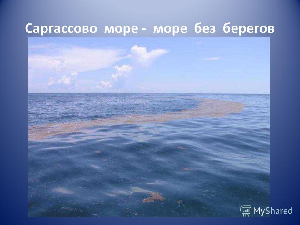 Саргассово море - море без берегов