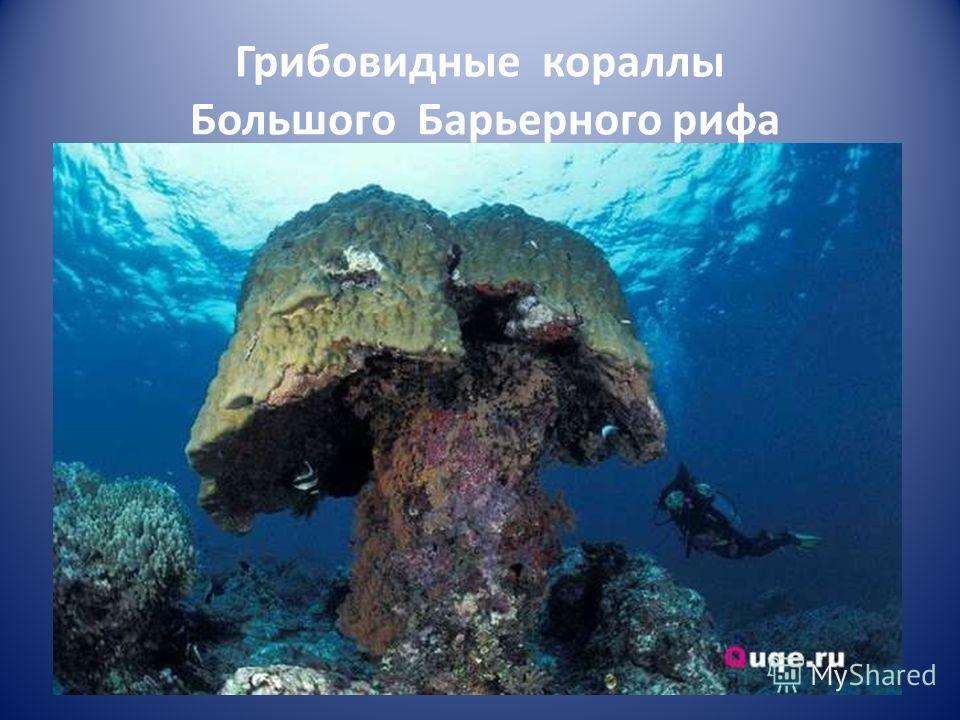 Грибовидные кораллы Большого Барьерного рифа