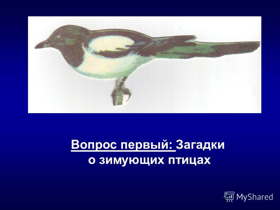 Вопрос первый: Загадки о зимующих птицах