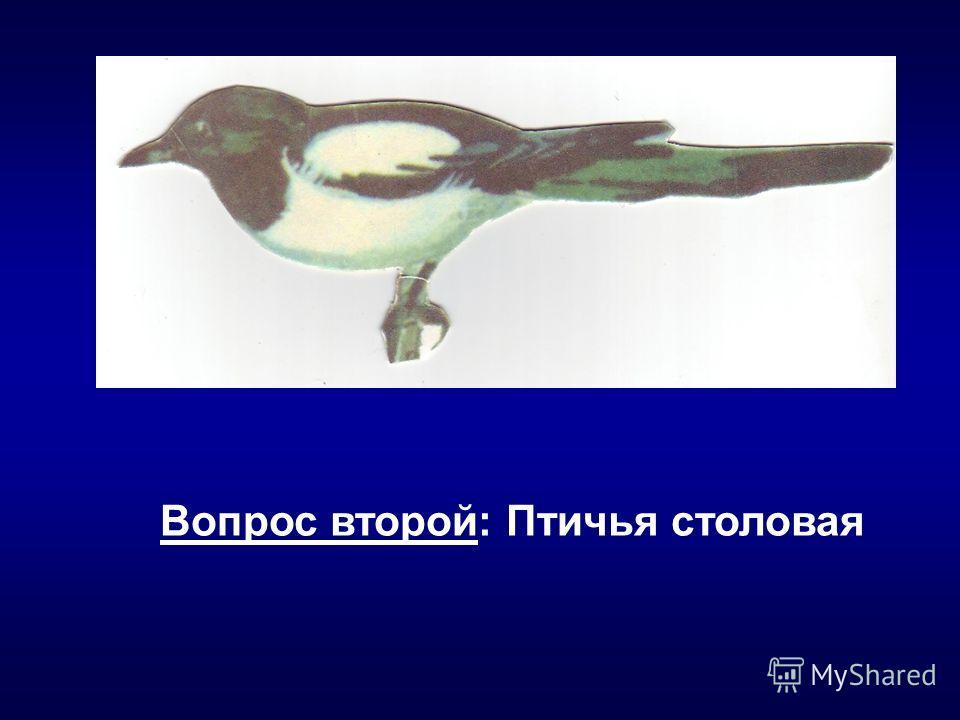 Вопрос второй: Птичья столовая