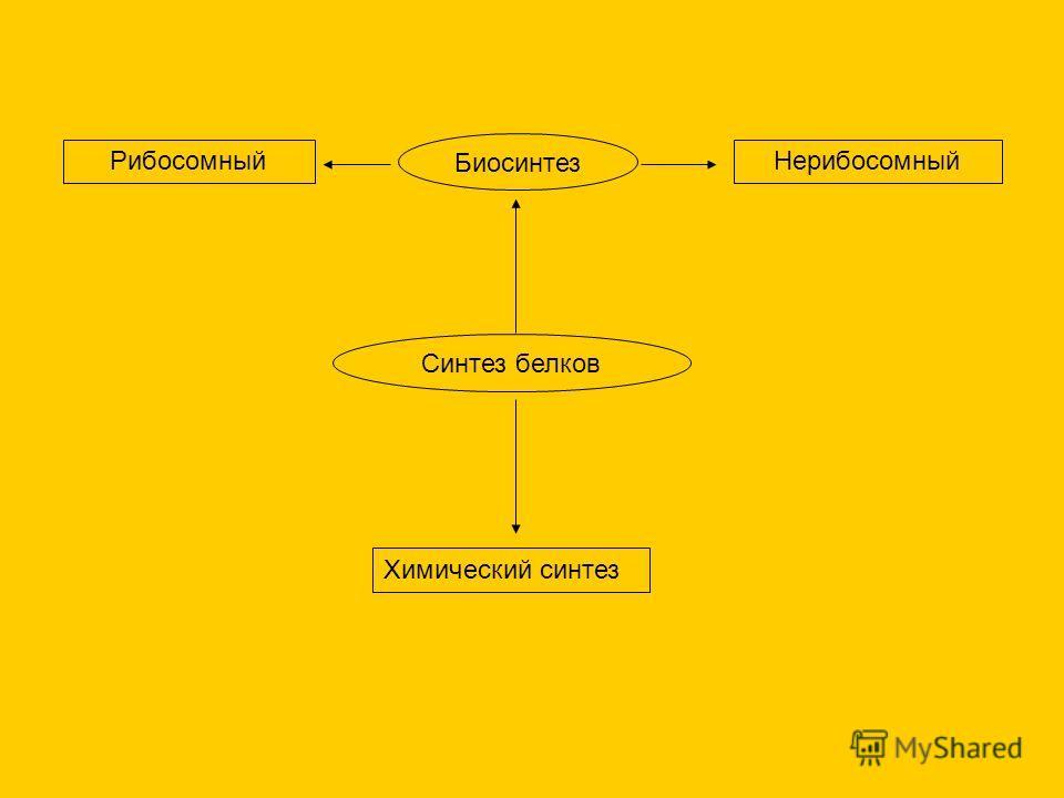 Синтез белков Химический синтез Биосинтез РибосомныйНерибосомный