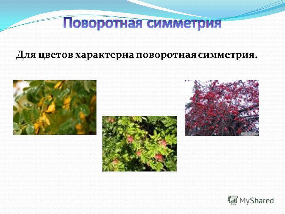 Для цветов характерна поворотная симметрия.