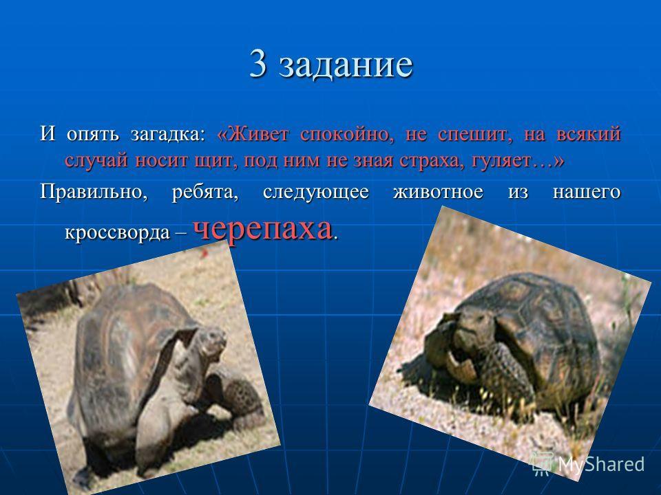 3 задание И опять загадка: «Живет спокойно, не спешит, на всякий случай носит щит, под ним не зная страха, гуляет…» Правильно, ребята, следующее животное из нашего кроссворда – черепаха.