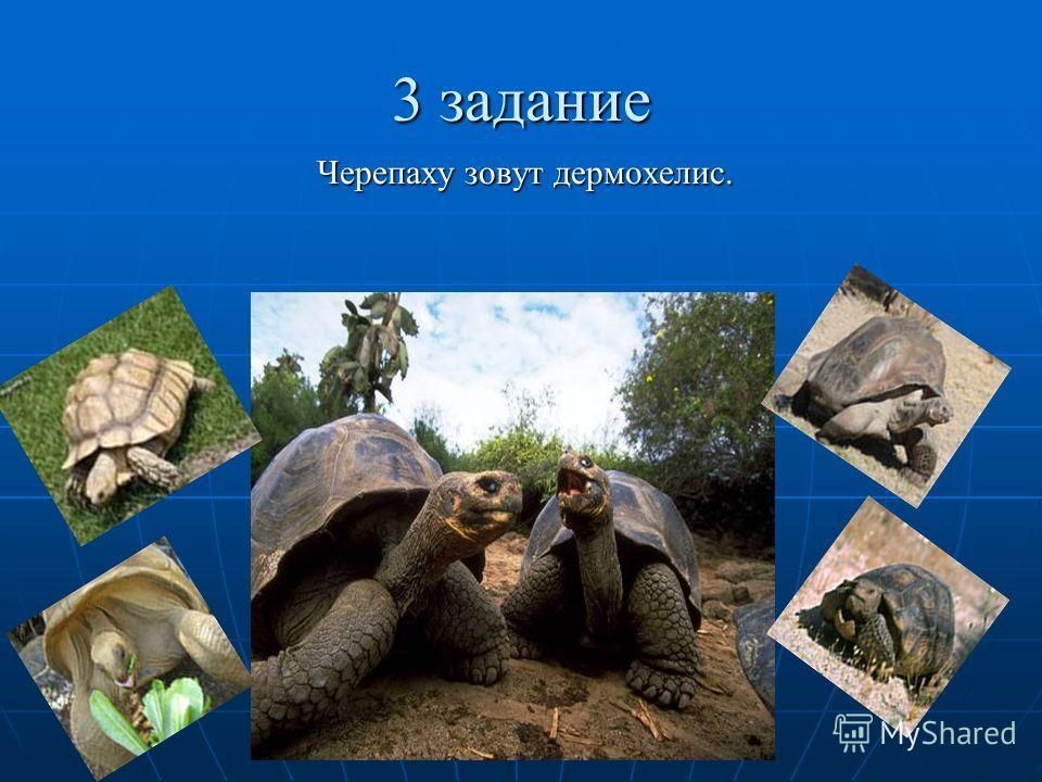 3 задание Черепаху зовут дермохелис.