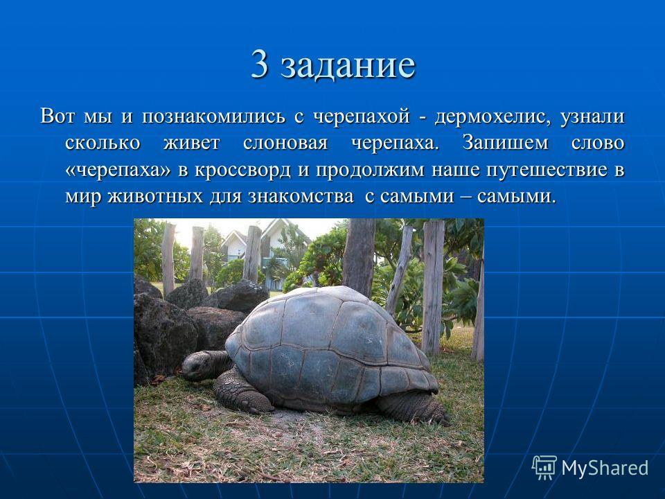 3 задание Вот мы и познакомились с черепахой - дермохелис, узнали сколько живет слоновая черепаха. Запишем слово «черепаха» в кроссворд и продолжим наше путешествие в мир животных для знакомства с самыми – самыми.