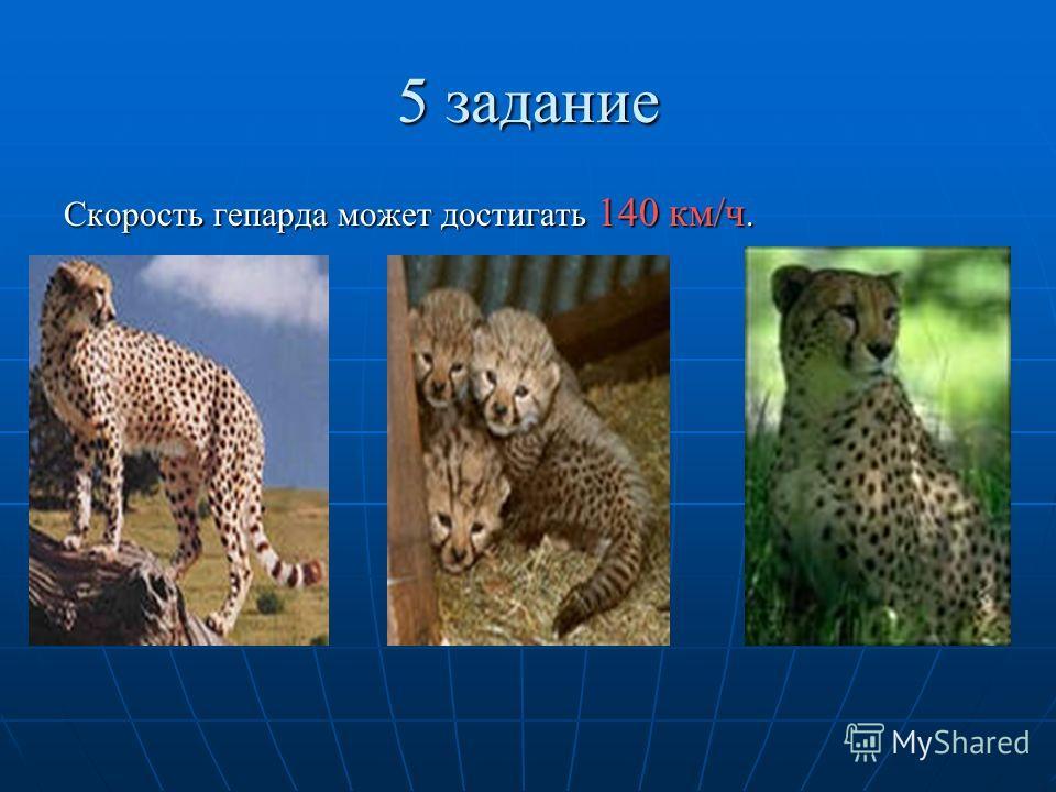 5 задание Скорость гепарда может достигать 140 км/ч.