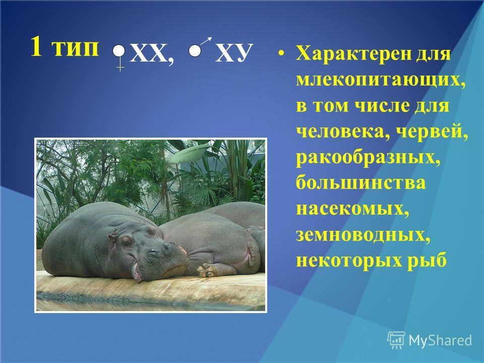 1 тип Характерен для млекопитающих, в том числе для человека, червей, ракообразных, большинства насекомых, земноводных, некоторых рыб ХХ, ХУ