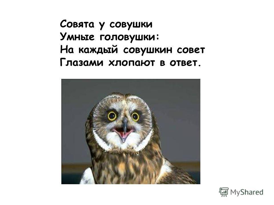 Совята у совушки Умные головушки: На каждый совушкин совет Глазами хлопают в ответ.