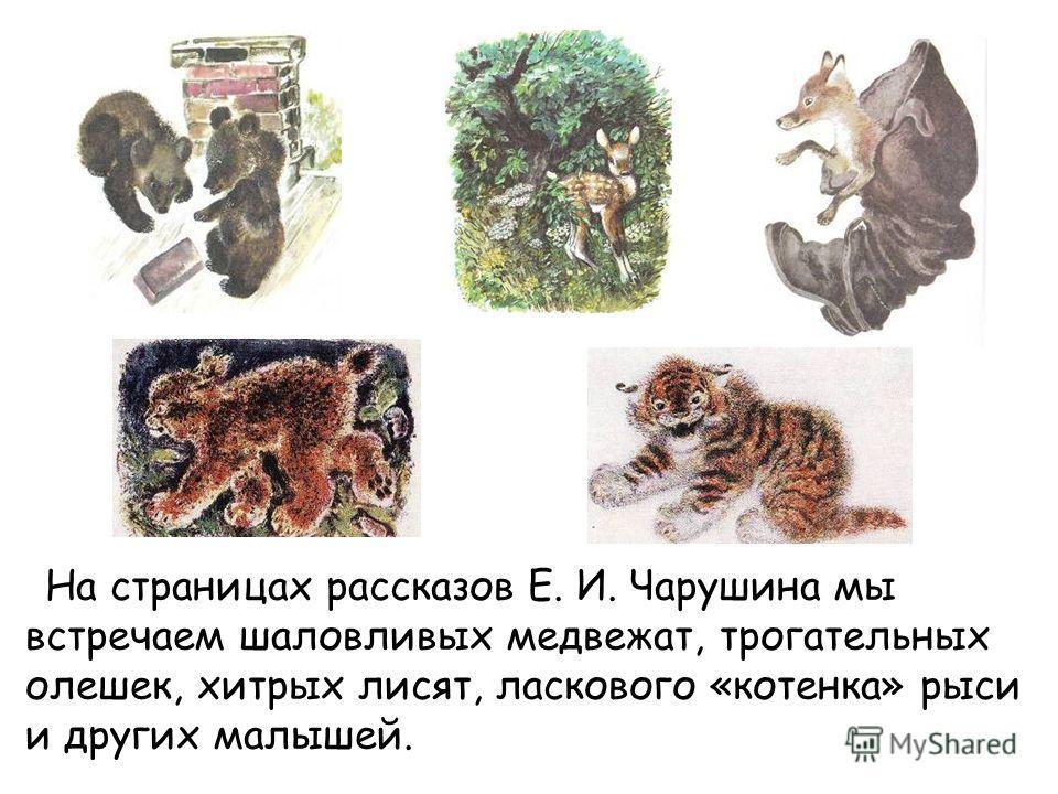 На страницах рассказов Е. И. Чарушина мы встречаем шаловливых медвежат, трогательных олешек, хитрых лисят, ласкового «котенка» рыси и других малышей.