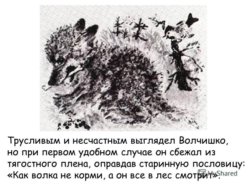 Трусливым и несчастным выглядел Волчишко, но при первом удобном случае он сбежал из тягостного плена, оправдав старинную пословицу: «Как волка не корми, а он все в лес смотрит».