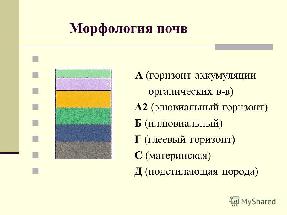 Морфология почв А (горизонт аккумуляции органических в-в) А2 (элювиальный горизонт) Б (иллювиальный) Г (глеевый горизонт) С (материнская) Д (подстилающая порода)