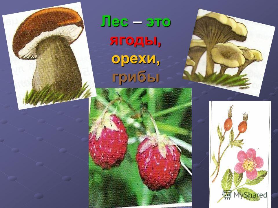 Лес – это ягоды, орехи, грибы