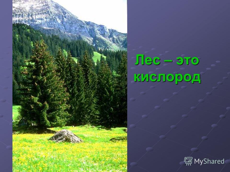 Лес – это кислород