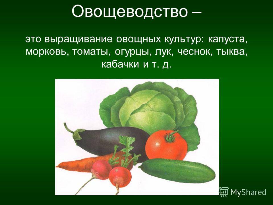 Овощеводство – это выращивание овощных культур: капуста, морковь, томаты, огурцы, лук, чеснок, тыква, кабачки и т. д.