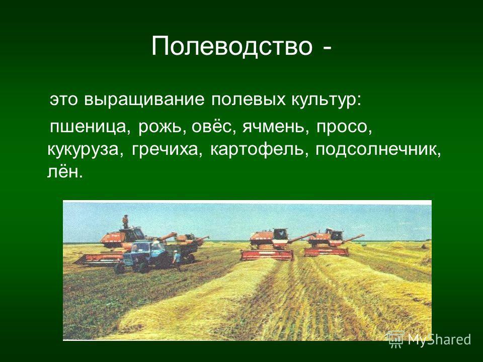 Полеводство - это выращивание полевых культур: пшеница, рожь, овёс, ячмень, просо, кукуруза, гречиха, картофель, подсолнечник, лён.