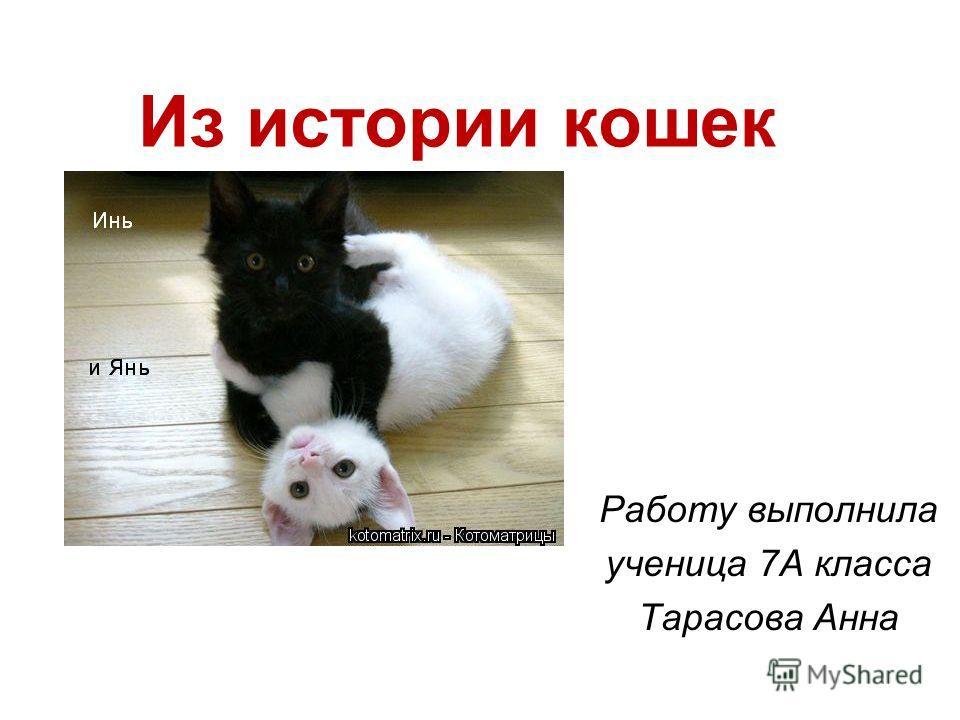 Из истории кошек Работу выполнила ученица 7А класса Тарасова Анна