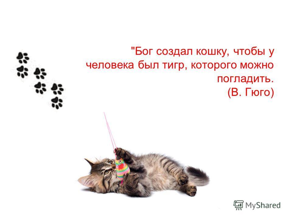 Бог создал кошку, чтобы у человека был тигр, которого можно погладить. (В. Гюго)