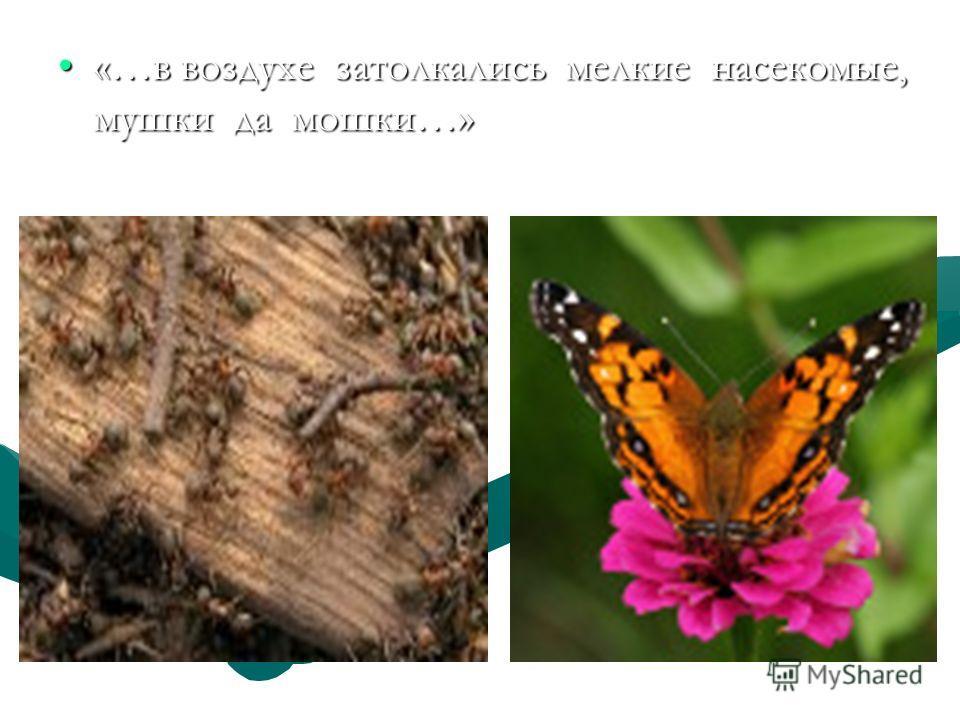 «…в воздухе затолкались мелкие насекомые, мушки да мошки…»«…в воздухе затолкались мелкие насекомые, мушки да мошки…»