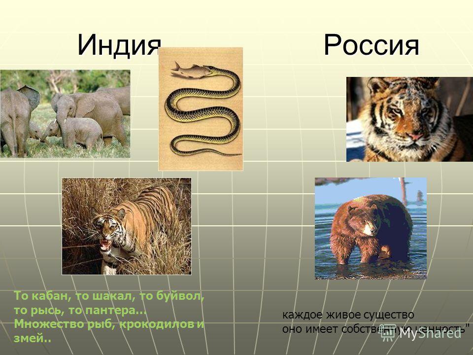 17 Индия Россия Индия Россия То кабан, то шакал, то буйвол, то рысь, то пантера... Множество рыб, крокодилов и змей.. каждое живое существо оно имеет собственную ценность.