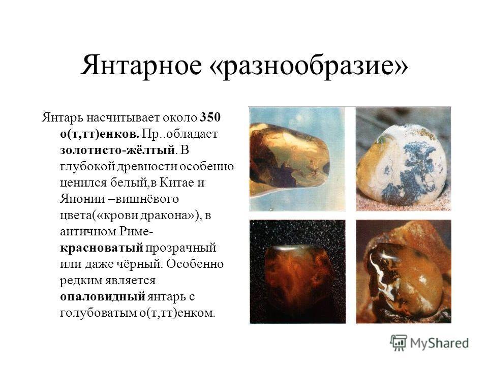 Янтарное «разнообразие» Янтарь насчитывает около 350 о(т,тт)енков. Пр..обладает золотисто-жёлтый. В глубокой древности особенно ценился белый,в Китае и Японии –вишнёвого цвета(«крови дракона»), в античном Риме- красноватый прозрачный или даже чёрный.