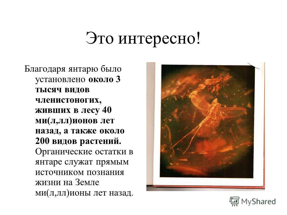 Это интересно! Благодаря янтарю было установлено около 3 тысяч видов членистоногих, живших в лесу 40 ми(л,лл)ионов лет назад, а также около 200 видов растений. Органические остатки в янтаре служат прямым источником познания жизни на Земле ми(л,лл)ион