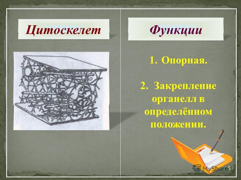 9 1.Опорная. 2. Закрепление органелл в определённом положении. Цитоскелет Функции