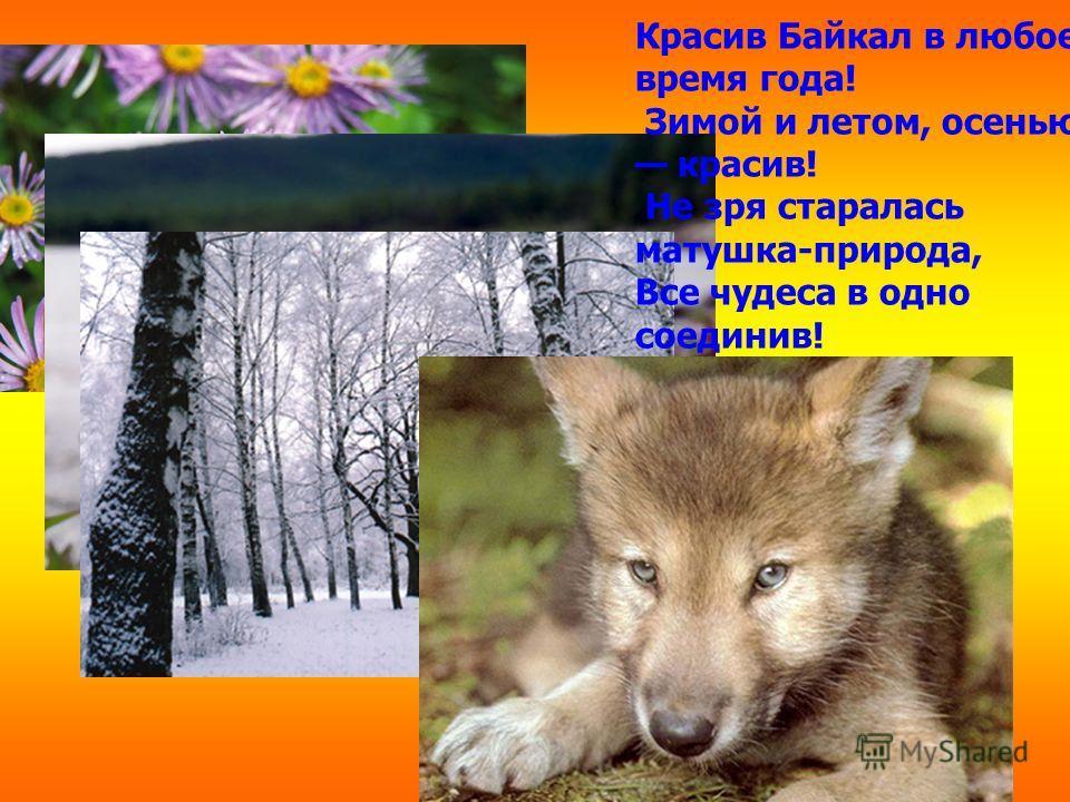 Красив Байкал в любое время года! Зимой и летом, осенью красив! Не зря старалась матушка-природа, Все чудеса в одно соединив!