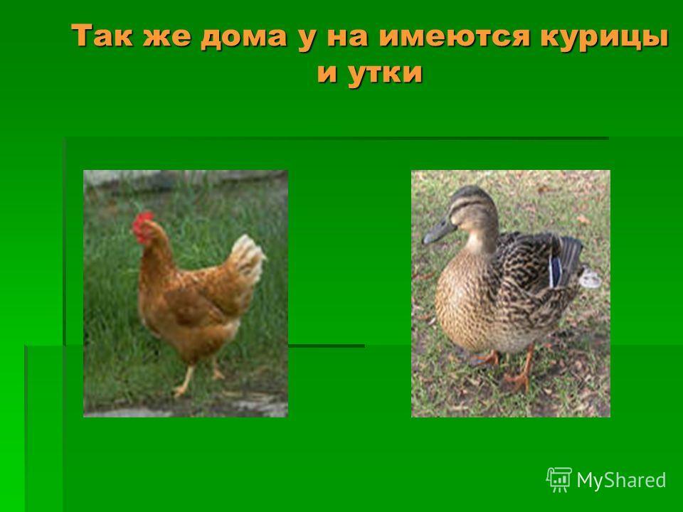 Так же дома у на имеются курицы и утки