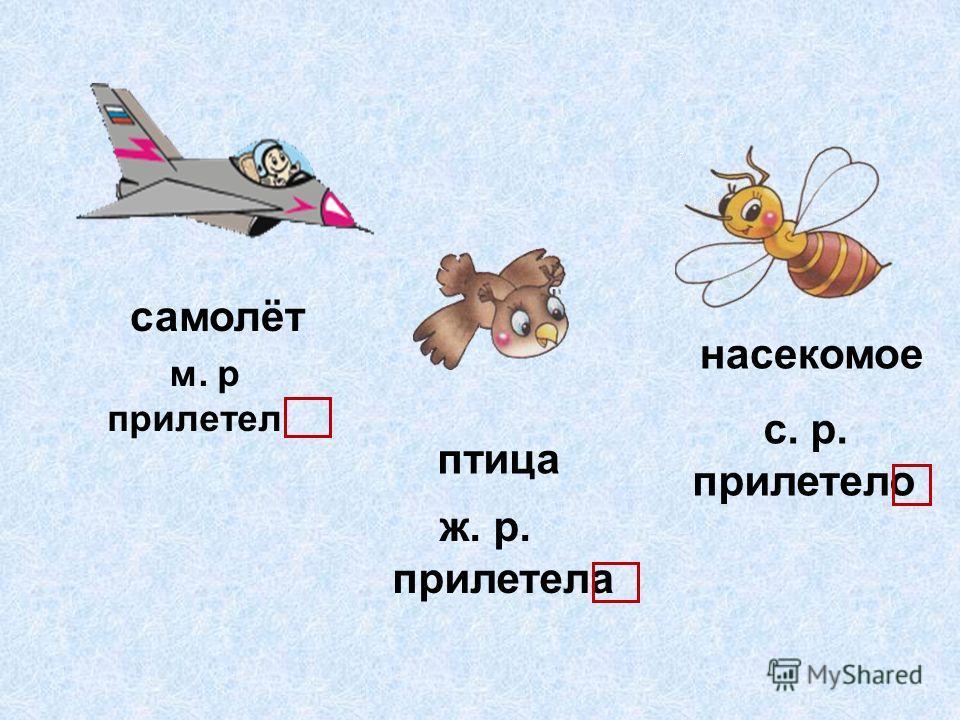 м. р прилетел ж. р. прилетела с. р. прилетело самолёт птица насекомое