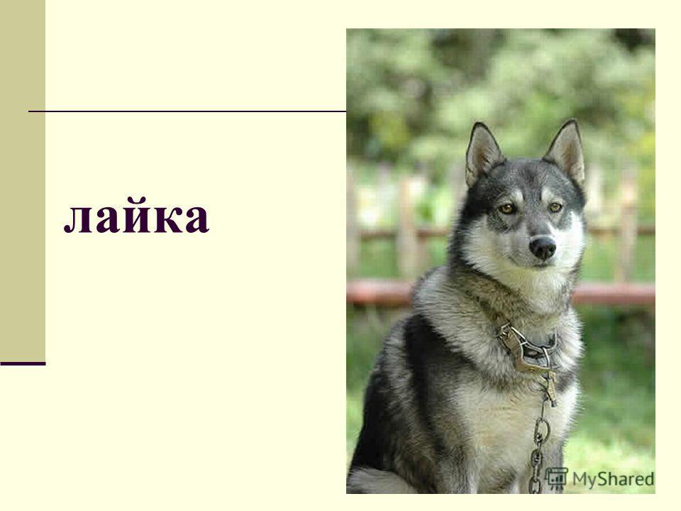лайка
