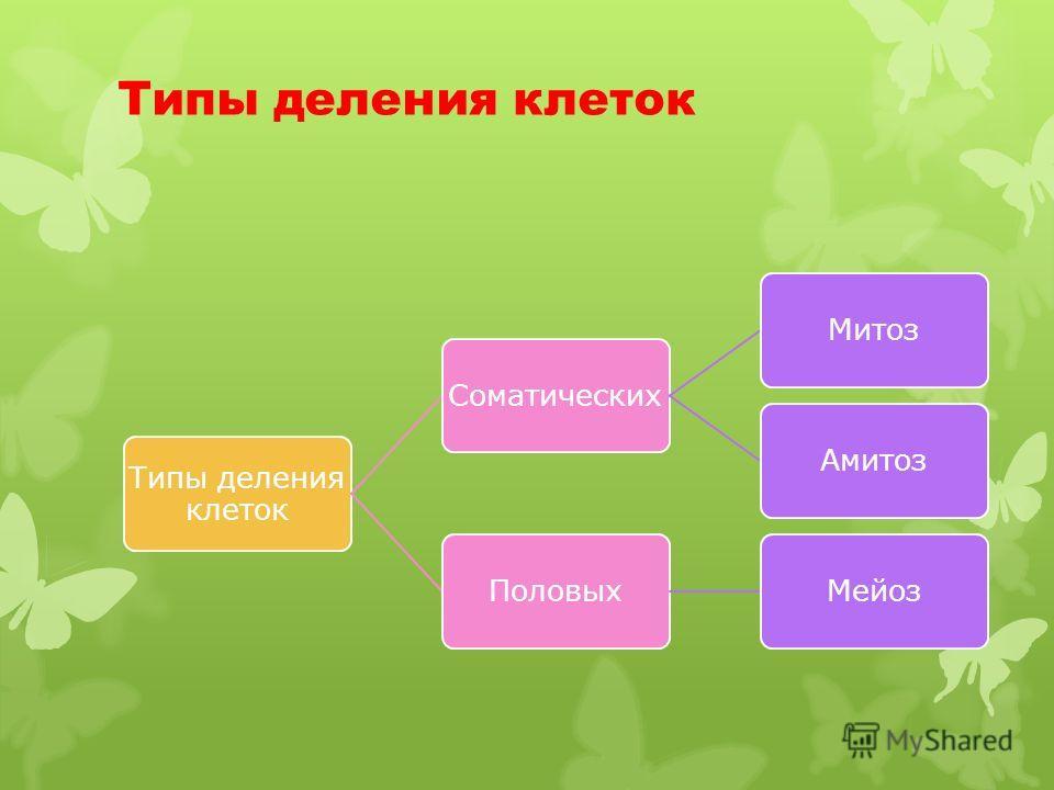 Типы деления клеток СоматическихМитозАмитозПоловыхМейоз