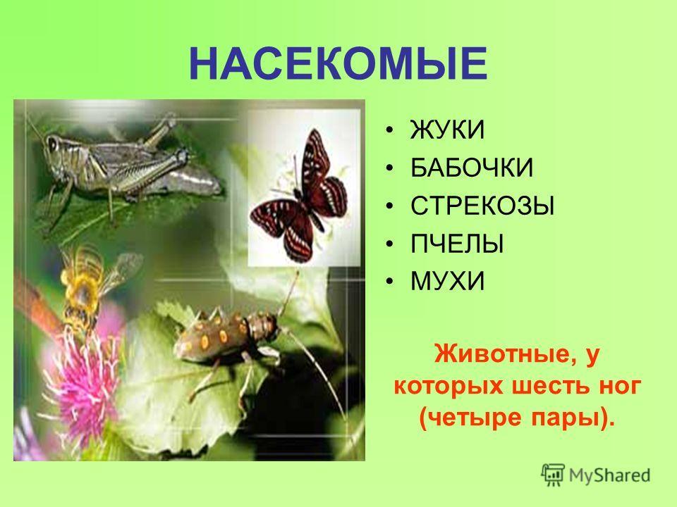 НАСЕКОМЫЕ ЖУКИ БАБОЧКИ СТРЕКОЗЫ ПЧЕЛЫ МУХИ Животные, у которых шесть ног (четыре пары).