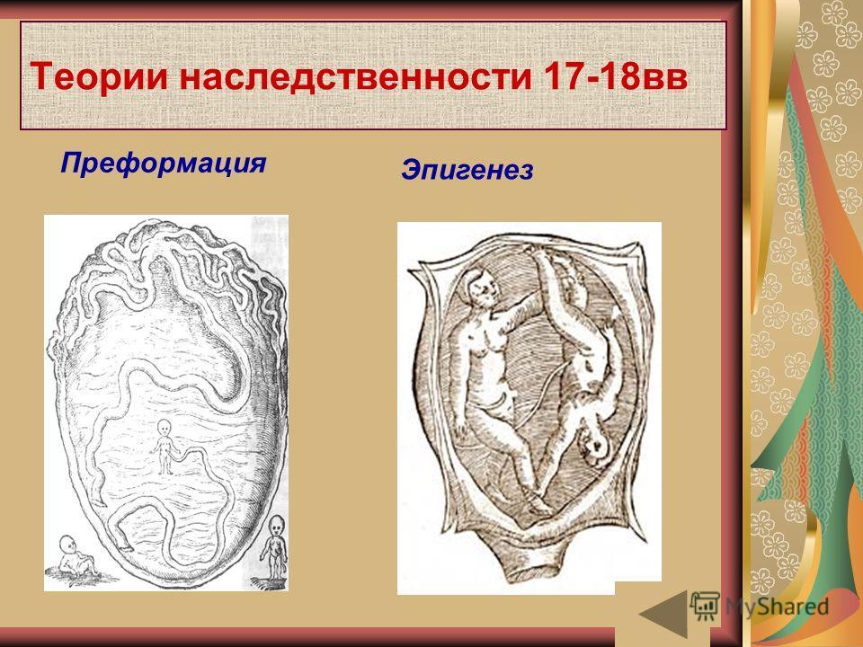 Теории наследственности 17-18вв Преформация Эпигенез