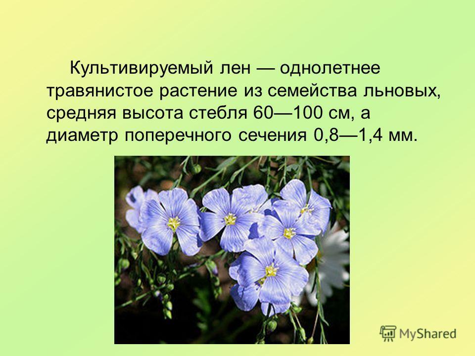 Культивируемый лен однолетнее травянистое растение из семейства льновых, средняя высота стебля 60100 см, а диаметр поперечного сечения 0,81,4 мм.