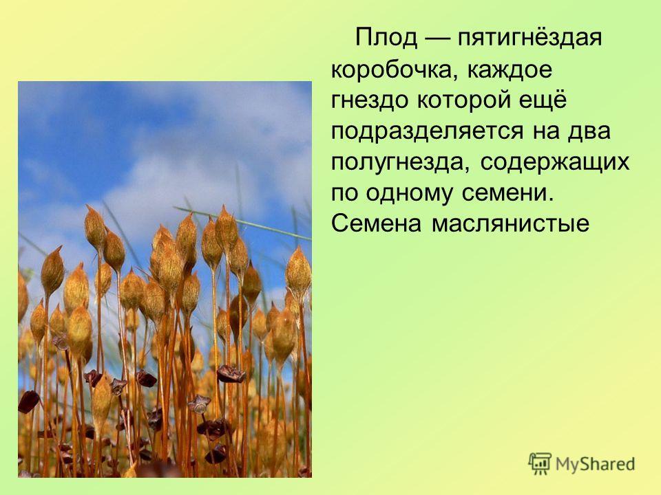 Плод пятигнёздая коробочка, каждое гнездо которой ещё подразделяется на два полугнезда, содержащих по одному семени. Семена маслянистые
