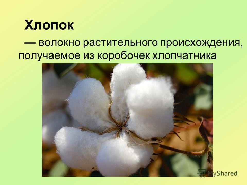 Хлопок волокно растительного происхождения, получаемое из коробочек хлопчатника