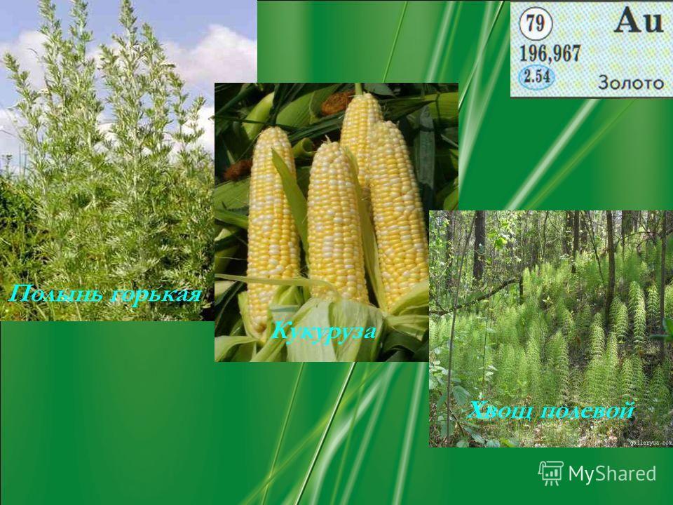 Полынь горькая Кукуруза Хвощ полевой