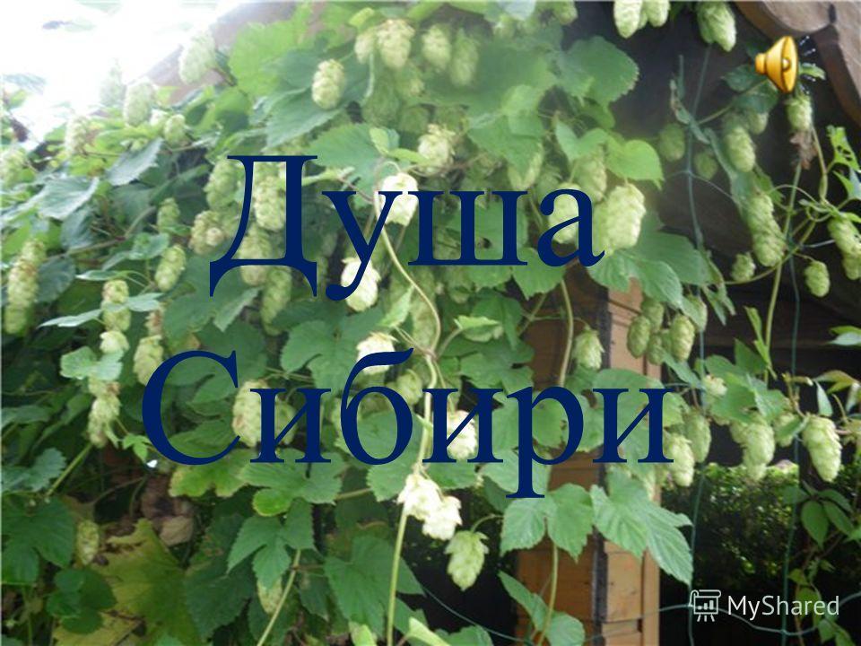Душа Сибири
