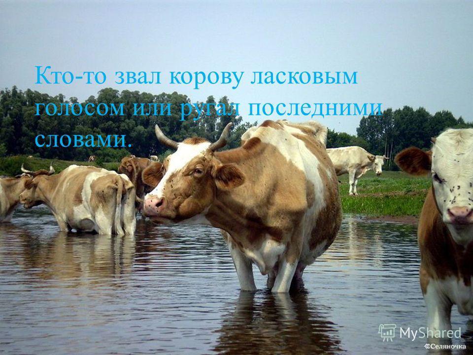 Кто-то звал корову ласковым голосом или ругал последними словами.