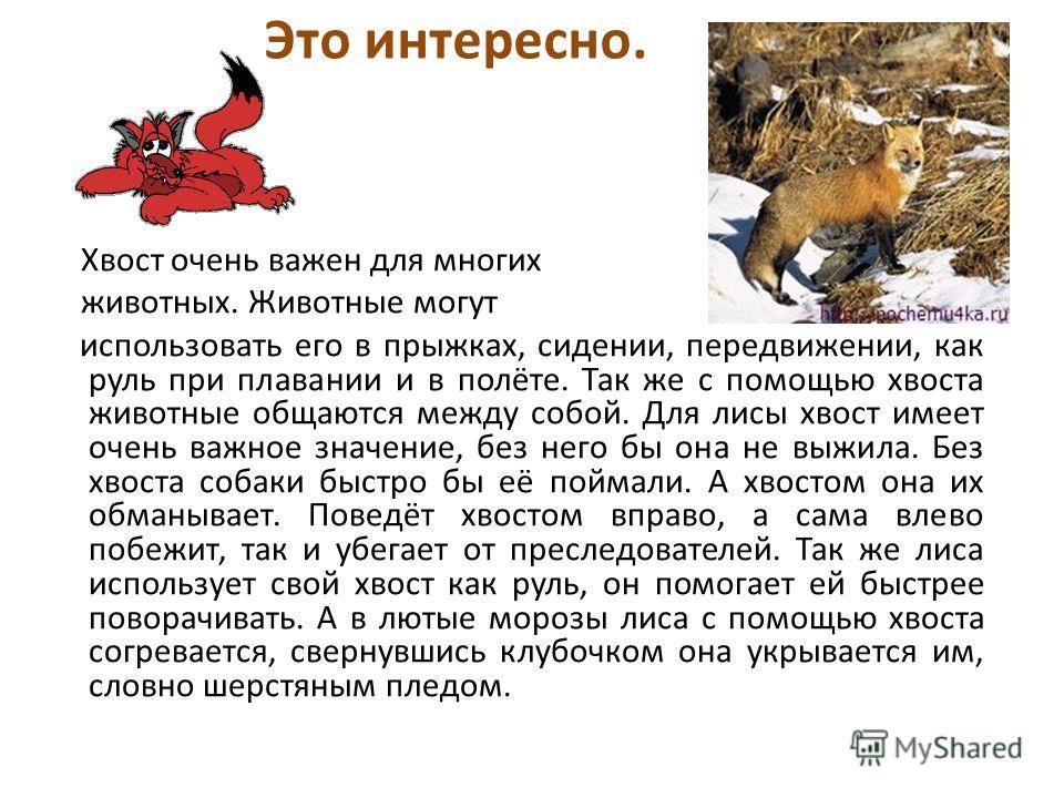 Хвост очень важен для многих животных. Животные могут использовать его в прыжках, сидении, передвижении, как руль при плавании и в полёте. Так же с помощью хвоста животные общаются между собой. Для лисы хвост имеет очень важное значение, без него бы