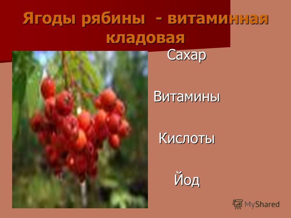 Ягоды рябины - витаминная кладовая СахарВитаминыКислотыЙод