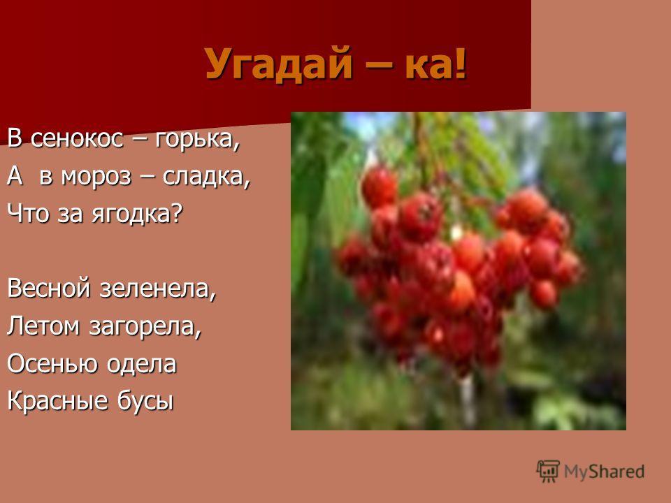 Угадай – ка! В сенокос – горька, А в мороз – сладка, Что за ягодка? Весной зеленела, Летом загорела, Осенью одела Красные бусы