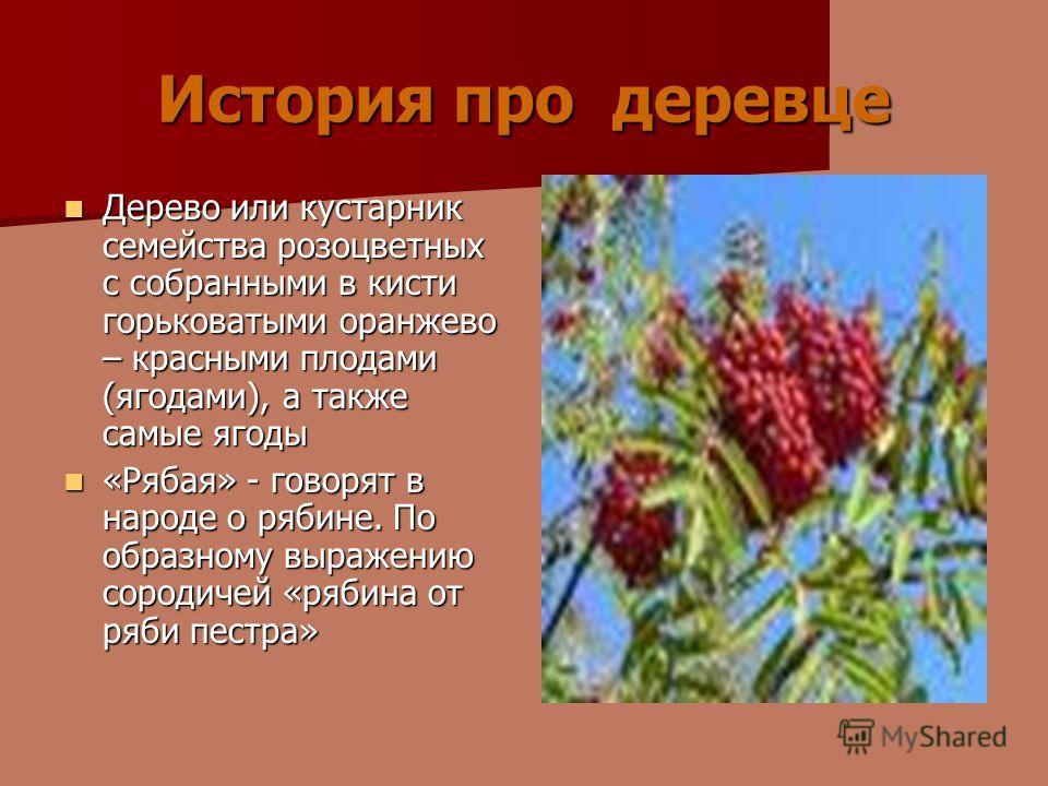 История про деревце Дерево или кустарник семейства розоцветных с собранными в кисти горьковатыми оранжево – красными плодами (ягодами), а также самые ягоды Дерево или кустарник семейства розоцветных с собранными в кисти горьковатыми оранжево – красны
