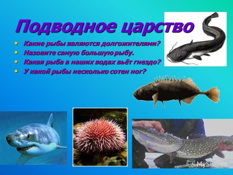 Подводное царство Какие рыбы являются долгожителями? Какие рыбы являются долгожителями? Назовите самую большую рыбу. Назовите самую большую рыбу. Какая рыба в наших водах вьёт гнездо? Какая рыба в наших водах вьёт гнездо? У какой рыбы несколько сотен