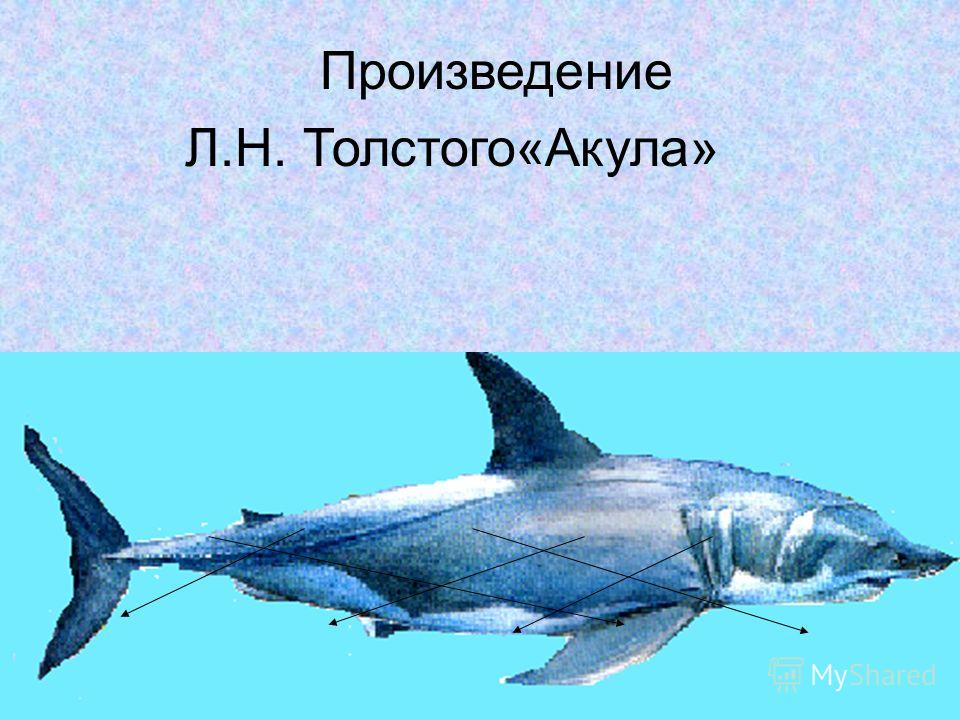 бе мо маль па рус реба палу рег чики Произведение Л.Н. Толстого«Акула»